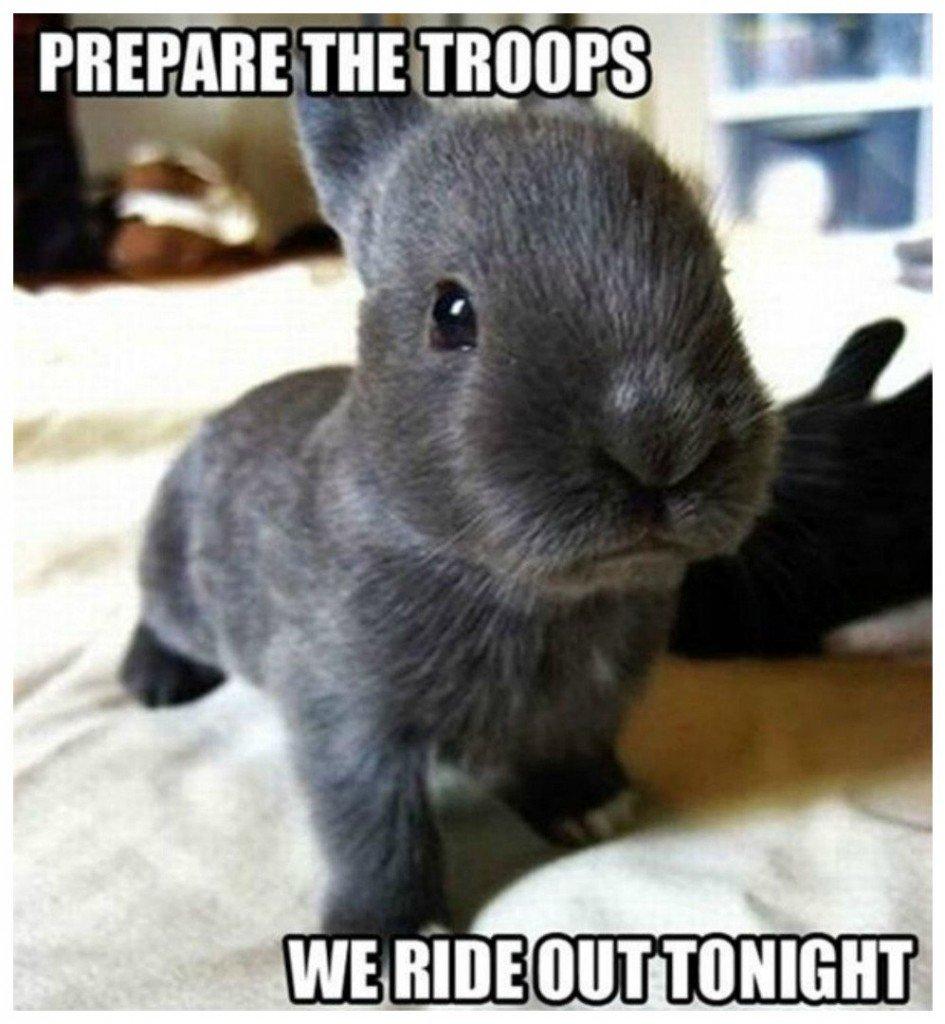20 hilarious animal memes that will make you lol 9